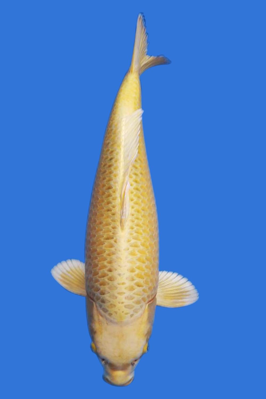Ki Matsuba